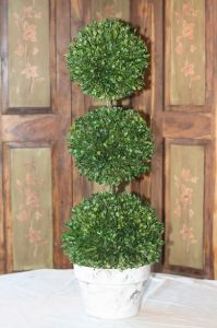 30 inch   Triple Ball Preserved Boxwood